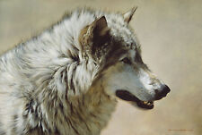 """Steadfast and Resolute-Gray Wolf Portrait"" Carl Brenders Limited Edition Print"
