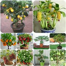 Bonsai Fruit Seeds - Apple Lemon Orange Kiwi Guava strawber Papaya Grapes banana