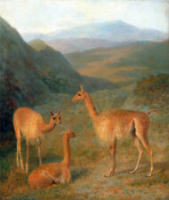 Vicunas by Jacques-Laurent Agasse - 60cm x 50.8cm Art Paper Print