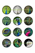 """PEACOCKS 1 """" CIRCLES  BOTTLE CAP IMAGES. $2.45-$5.50 *****FREE SHIPPING*****"""