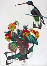 1857,REICHENBACH HUMMINGBIRDS FINE HAND COLOR ENGR. FOLIO U2D