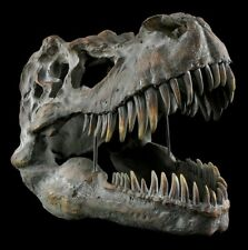 Tête de mort Tyrannosaurus Rex grand Dinosaure Crâne Squelette Fossiles T-Rex
