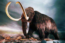 WOOLLY MAMMOTH poster PREHISTORIC GIGANTIC TUSKS shaggy fur HUGE 24X36