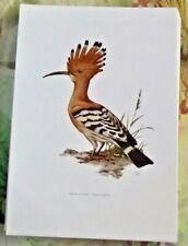 Planche Affiche poster art print Image Ornithologie Huppe Fasciée oiseau