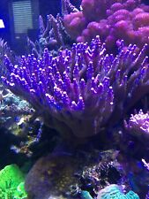 Live coral frag pack - Sps/Lps/Softies- 10 total frags 1+ inches in length