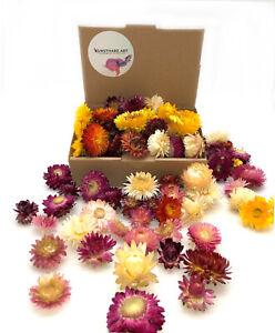 Getrocknete Strohblumenköpfe Helichrysum Blumen Blüten Blume Blumenstrauß Deko