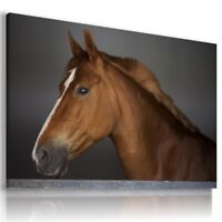 HORSES MUSTANG Domestic And Wild Animals Canvas Wall Art Picture Large AN272 X