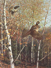 Owen Gromme Ruffed Grouse