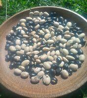 Assorted Organic Mucuna Pruriens Seeds, 35 Seeds