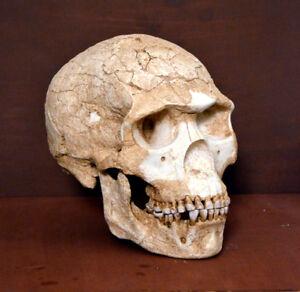 Skhul 5 Skull Replica