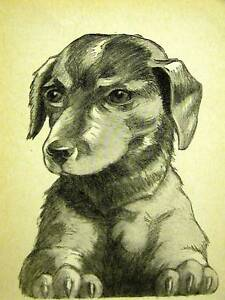 Rice SWEET DACHSHUND PUPPY 1931 Dog Art Print Matted