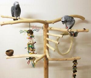 Freisitz, Papageien, Buchenholz, Papageienspielzeug,mittlere/große Papageien XXL