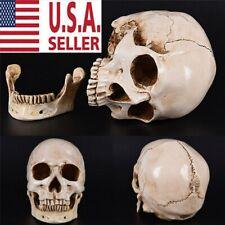 1:1 Human Skull Replica Resin Model Realistic Retro Medical Art Teach Life Size