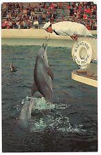 ZIPPY PORPOISE Marineland Pacific Palos Verdes CALIFORNIA Postcard CA Dolphin