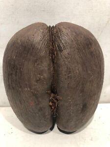 Seme Gigante Coco De Mer