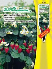Ampelerdbeere 'Temptation' - Fragaria vesca, Erdbeere Erdbeeren Samen 40301