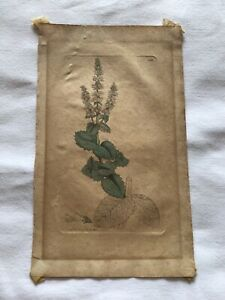 Antique 1797 Botanical Print By Sowerby London Mentha Horse Mint
