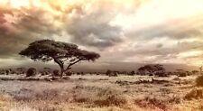 AFRICA SAVANNA LANDSCAPE POSTER PRINT 36x65 BIG 9 MIL PAPER