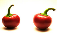 Red Cherry Bomb Hot Chili Pepper Seeds 50 PCS