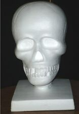 "20.5 ""H x 12"" W Bigfoot Mega #Skull / Mascot Display Head- White- Polly Products"