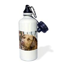 3dRose wb_140266_1 Chesapeake Bay Retriever Dog, Sports Water Bottle, 21 oz, Whi