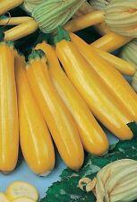 50 seeds / Squash Zucchini Goldberry seeds vegetable from Ukraine