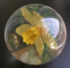 Hafod Grange vintage perspex resin paperweight wild daffodil real flower Wales