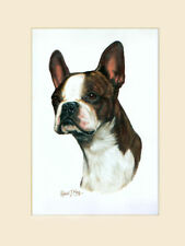 Original Boston Terrier Painting by Robert J. May