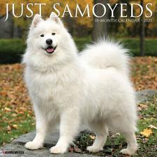 Just Samoyeds (dog breed calendar) 2021 Wall Calendar (Free Shipping)
