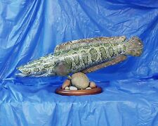 "34"" Snakehead Reproduction Mount Invasive Species!"