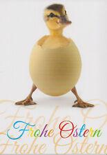 Ansichtskarte: niedliches Entenküken mit Eierschale - Frohe Ostern - duckling