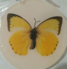 Preserved Butterfly Ref Magnet Lot of 12pcs