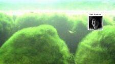 Wassergras  Wasserpflanzen Sumpfpflanzen Bodenpflanzen für den Gartenteich Teich