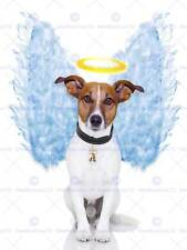 Angel Wings Jack Russell Dog Halo Photo Art Print Poster Picture Bmp2032a