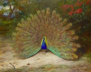 Home Art Wall Decor Peacock Butterfly Oil painting Picture Printed on canvas