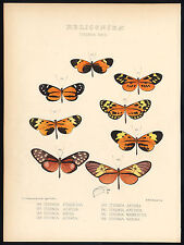 Antique Butterfly and Moth Print-HELICONIDAE-ITHOMIA-CALLITHOMIA-Hewitson-1870