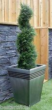 Best Artificial 3ft 90cm Topiary Cedar Spiral Outdoor Conifer Tree alt Ball Bay