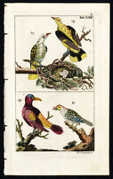 Antique Print-GOLDEN ORIOLE-PERSIAN-PLATE XXII-Wilhelm-1810