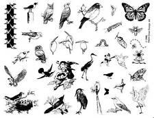 8 1/2 x 11 rubber stamp sheet, BIRDS & BUGS #9