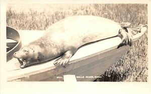 H41/ Wells Beach Maine RPPC Postcard c40s Seal Open Mouth Boat Mammal