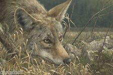 Denis MAYER Coyote LTD Giclee Canvas art with certificate MINT signed numbered