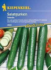Salatgurken Schlangengurken * Saladin F1 * MHD 01/21 Kiepenkerl 2660