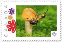 ANT on MUSHROOM, Custom Postage stamp MNH Canada 2018 [p18-04sn17]
