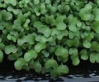 10,000+ Microgreens (Sprouting) Seeds- Broccoli Waltham- 41g, 1.5 ounces
