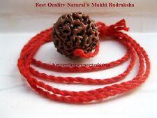 8 Mukhi Rudraksha /Eight Face Rudraksha -Genuine Java Bead 25 mm in Red Thread