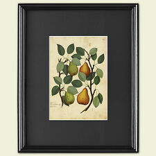 Vintage Grabado Botánico hortícolas victoriana arte Sketch Poster A3 No. 1