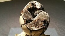 "septarian dragons egg huge 5"" x 4"" approx septarian geode fossil"
