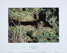 "Martin Ridley ""yellow-necked ratón"" Imprimir nuevo tamaño: 40 Cm X 32cm Raro"