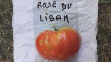 graines de tomates rose du Liban sachets 30 graines culture procédé bio