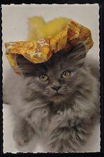 Vintage Postcard Adorable Cat / Kitten - Hallmark - Unused - #1